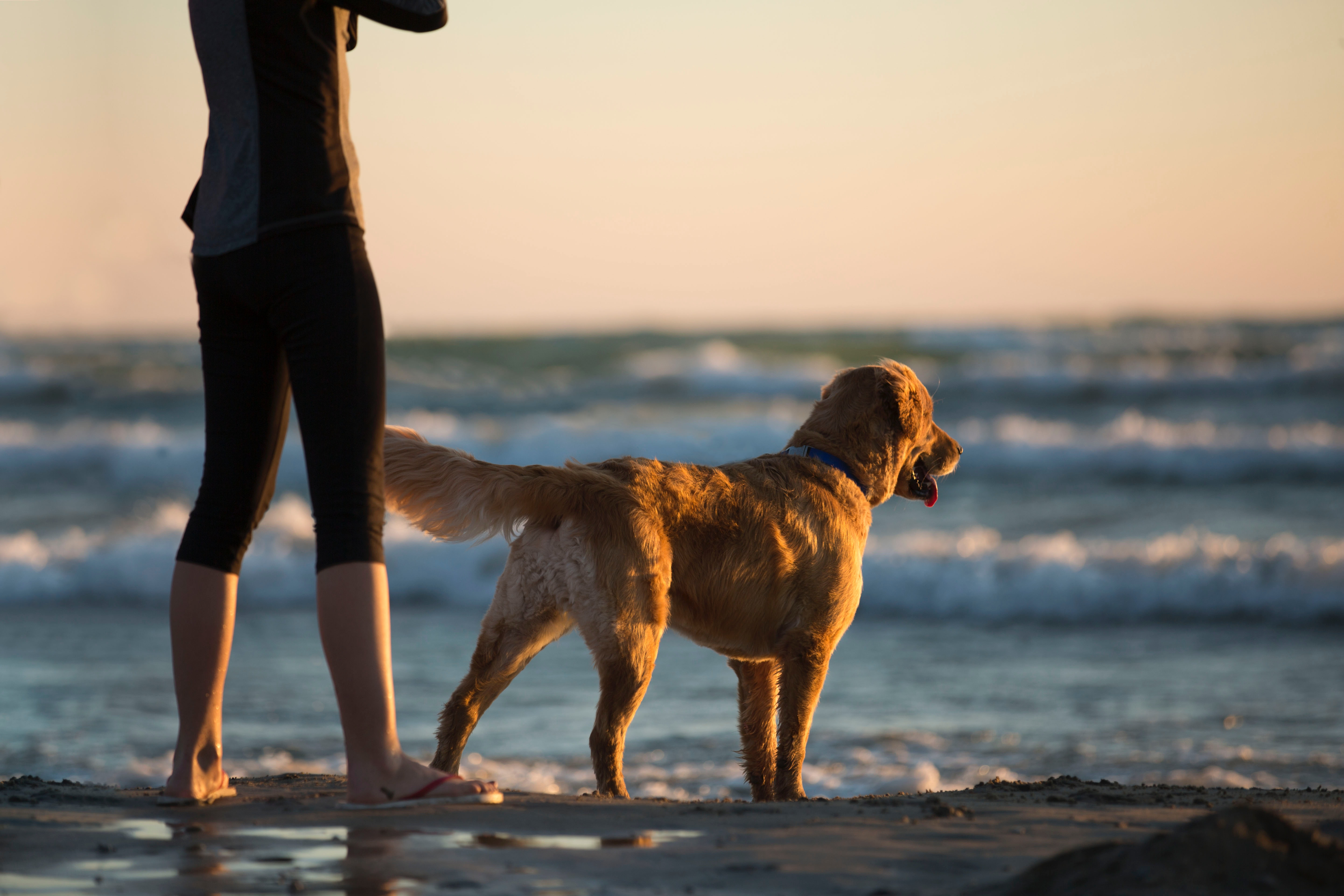 pet-friendly things to do camden maine - dog-friendly parks and beaches