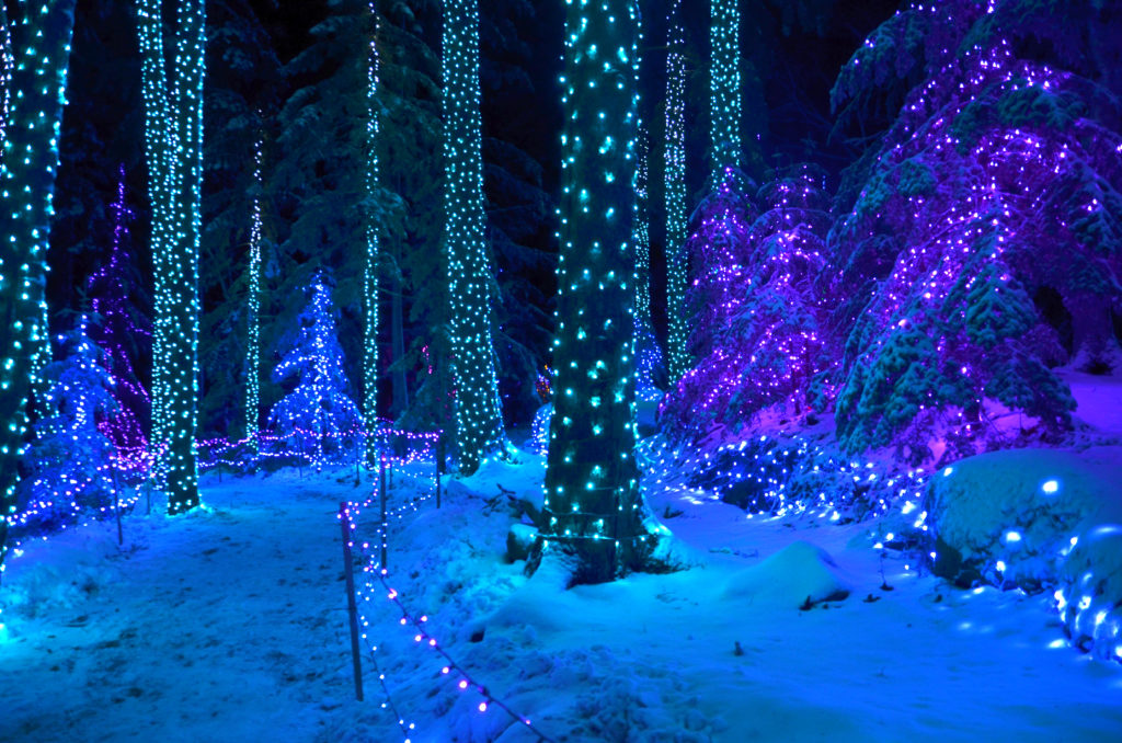 path with beautiful lights - learn more about Gardens Aglow in Coastal Maine