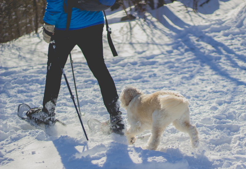 snowshoeing with dog at heels - winter things to do in Camden