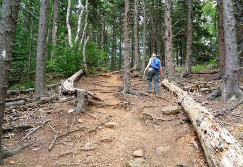 The BEST Hiking Camden Maine Has to Offer: 35 Hiking Trails to Explore